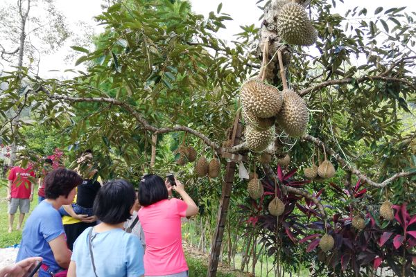 durianfeast-075846C24E-72A4-DEE6-2F0C-432F99D3B51C.jpg