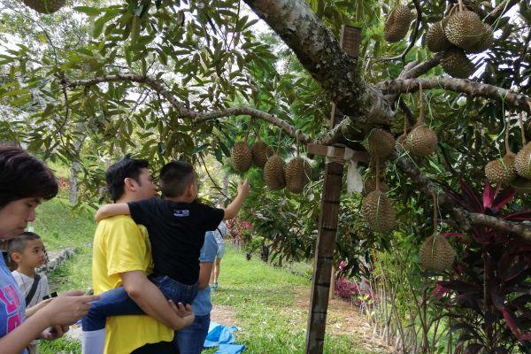 durianfeast-080744ABF4-A7F1-F908-F2B1-B5657A02A331.jpg
