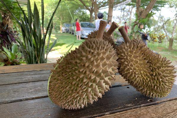 durianfeast-09247340B2-594F-CA3F-C9CD-27AD250E3756.jpg