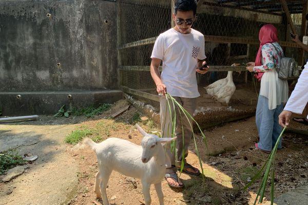 goat-farm-05C7E584C5-3A60-7331-C6E3-97E59FEBCDDE.jpg