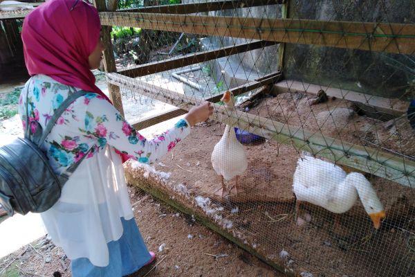 goat-farm-061A3C650A-70FC-D7C1-AAB1-ADBB54D1CA48.jpg
