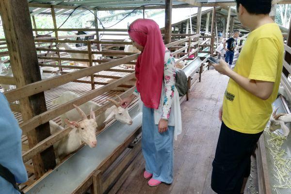 goat-farm-13D3627B1C-2F55-628D-C3E3-0FF0FE464D1D.jpg
