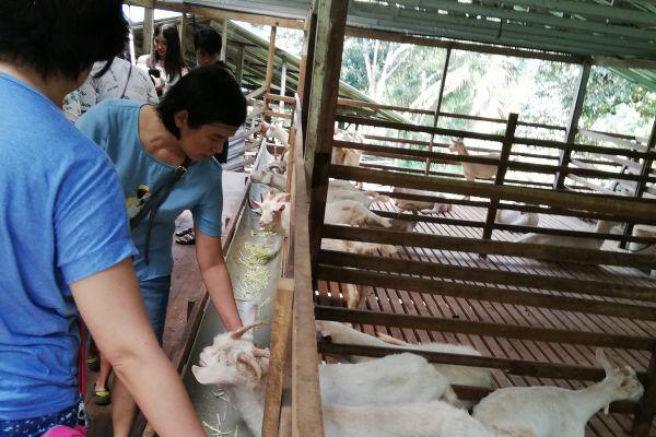 goat-farm-14034D6B72-4E85-E176-3190-806DDD0258B8.jpg